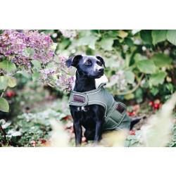 Kentucky Dog Rug Waterproof